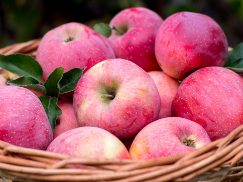 38 lb box of apples (single variety of your choice) - $25-30 depending on variety